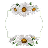 Wildflower chamomile flower frame in a watercolor style isolated. Stock Photos