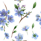 Wildflower cherry flower pattern in a watercolor style isolated. Full name of the plant: cherry, hulthemia, rosa. Aquarelle wild flower for background, texture vector illustration