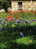 Wildflower Church. Church Bluebonnets Indidan Paintbrushes spring stock photo