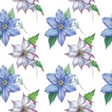 Wildflower clematis flower pattern in a watercolor style isolated. Royalty Free Stock Image