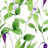 Wildflower clematis hanajima kwiatu wzór w akwarela stylu Obrazy Stock