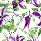 Wildflower clematis hanajima kwiatu wzór w akwarela stylu Fotografia Royalty Free