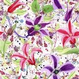 Wildflower clematis hanajima kwiatu wzór w akwarela stylu Zdjęcie Royalty Free