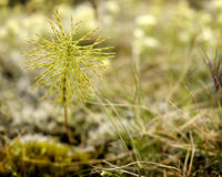 Wildflower in closeup. Wildflowers in closeup on a mossy and grassy field Royalty Free Stock Photo
