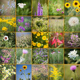 Wildflower collage. Kansas wildflowers in a 20-photo collage Stock Photo