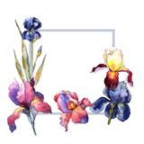 Wildflower colorful iris flower frame in a watercolor style. Stock Photos