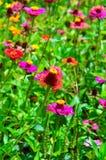 Wildflower colorido del verano foto de archivo