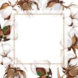Wildflower cotton flower frame in a watercolor style. Stock Photo