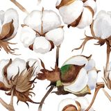 Wildflower cotton flower pattern in a watercolor style. Stock Photo