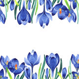 Wildflower crocuses flower frame in a watercolor style isolated. vector illustration