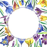Wildflower crocuses flower frame in a watercolor style isolated. Stock Photos