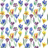 Wildflower crocuses flower pattern in a watercolor style isolated. vector illustration