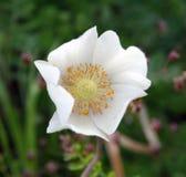 Wildflower d'été Images stock