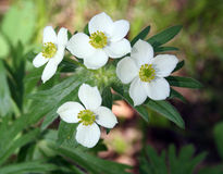 Wildflower d'été Photos libres de droits