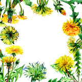 Wildflower dandelion flower frame in a watercolor style isolated. Royalty Free Stock Images