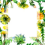 Wildflower dandelion flower frame in a watercolor style isolated. Stock Image