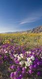 Wildflower de désert. Photo libre de droits
