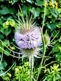Wildflower de l'Ohio Photos libres de droits