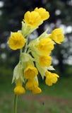 Wildflower de ressort Photo stock