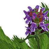 Wildflower deco grasses card. Illustration Prunella Vulgaris wildflower decor grasses background white color backdrop card Royalty Free Stock Photos