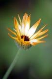 Wildflower del jardín foto de archivo libre de regalías