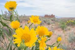 Wildflower dell'Utah Fotografie Stock
