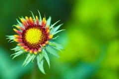 Wildflower di estate Fotografia Stock Libera da Diritti