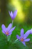 Wildflower do outono Imagens de Stock