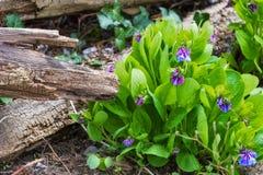Wildflower em um assoalho da floresta imagens de stock royalty free