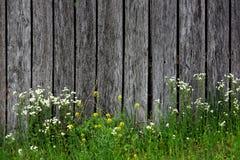 Wildflower en Barnwood Stock Afbeeldingen