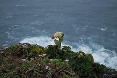 Wildflower en el top de punto Reyes Imagenes de archivo