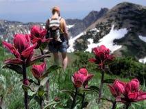 Wildflower et randonneur photographie stock libre de droits
