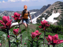 Wildflower et randonneur photo stock