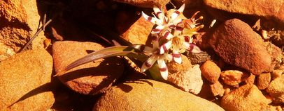 Wildflower excelente Fotografia de Stock Royalty Free