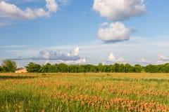 Wildflower - Feld und Ackerland des indischen Malerpinsels Stockfotografie