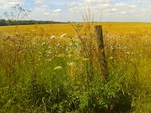 Wildflower fence. Wildflower border kent field sunny summer Royalty Free Stock Images