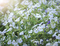 Wildflower field in the afternoon light fades. Many flowers forming carpet felt light as silk smooth soft spring break in beautiful sunshine Royalty Free Stock Photos