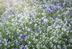 Wildflower field in the afternoon light fades. Many flowers forming carpet felt light as silk smooth soft spring break in beautiful sunshine Stock Photos