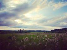 Wildflower fields forever. Big sky, open fields in upstate New York Stock Photo