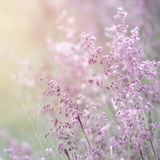 Wildflower fine art background Royalty Free Stock Photography