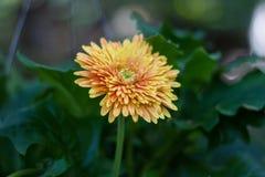 Wildflower in fioritura Immagini Stock
