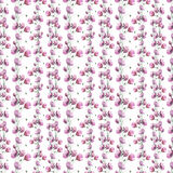 Wildflower flower poppy pattern in a watercolor style. Royalty Free Stock Photography