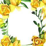 Wildflower fresia flower frame in a watercolor style. Royalty Free Stock Image