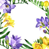 Wildflower fresia flower frame in a watercolor style. Royalty Free Stock Photo