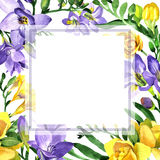 Wildflower fresia flower frame in a watercolor style. Stock Photography
