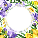 Wildflower fresia flower frame in a watercolor style. Royalty Free Stock Images