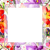 Wildflower fresia flower frame in a watercolor style. Royalty Free Stock Photography