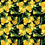 Wildflower fresia flower pattern in a watercolor style. Stock Photos