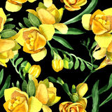 Wildflower fresia flower pattern in a watercolor style. Stock Photo