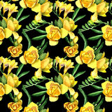 Wildflower fresia flower pattern in a watercolor style. Royalty Free Stock Photos